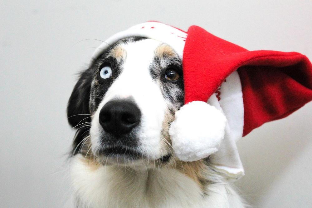 pet holiday safety from our veterinarian in pensacola