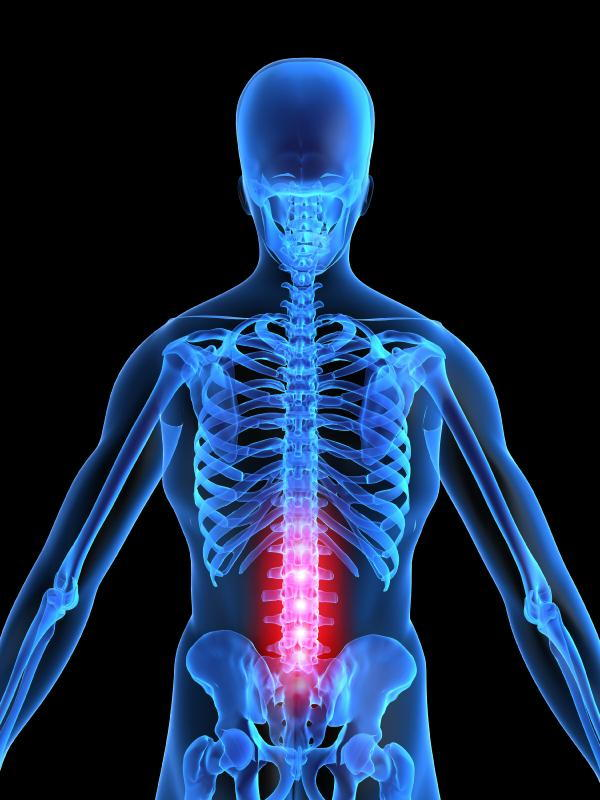 Vertebrae Of The Week Review Of Your Lumbar Region Vertebrae