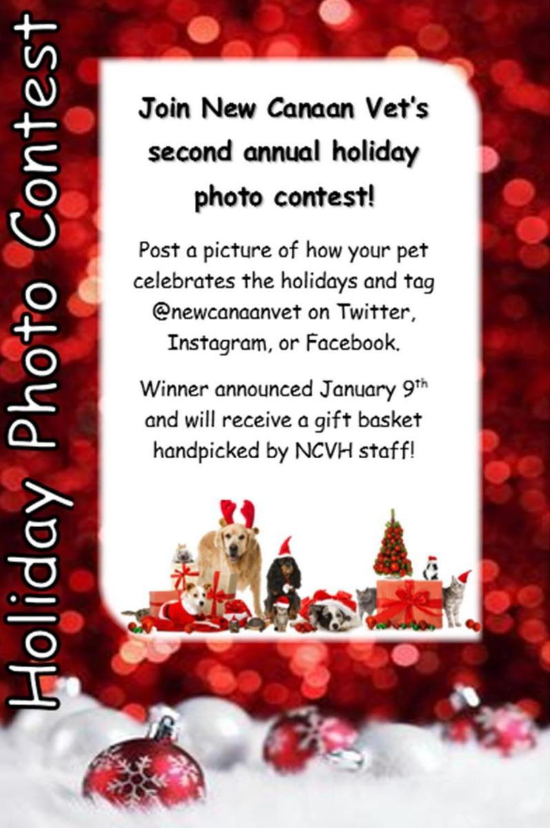 Holiday photo contest get excited for ncvhs second annual holiday photo contest we want to see pics of your pets enjoying the holidays they can be posing with decorations kristyandbryce Image collections