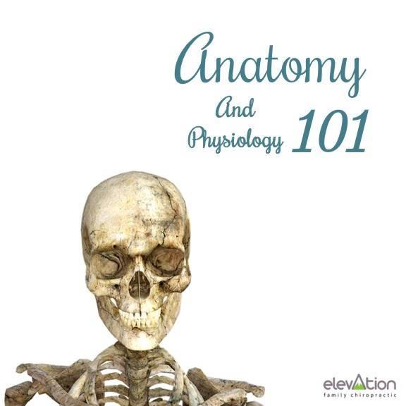 Anatomy and Physiology 101