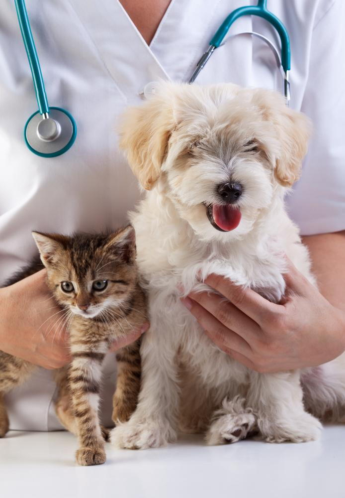 Why Spay and Neuter Your Pets to Prevent Health Problems in Lexington, Kentucky (KY)