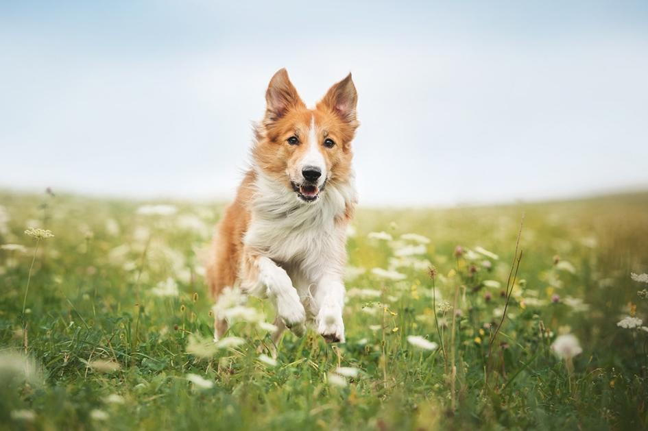 How to Treat Your Pet's Allergies in Lexington, Kentucky (KY)