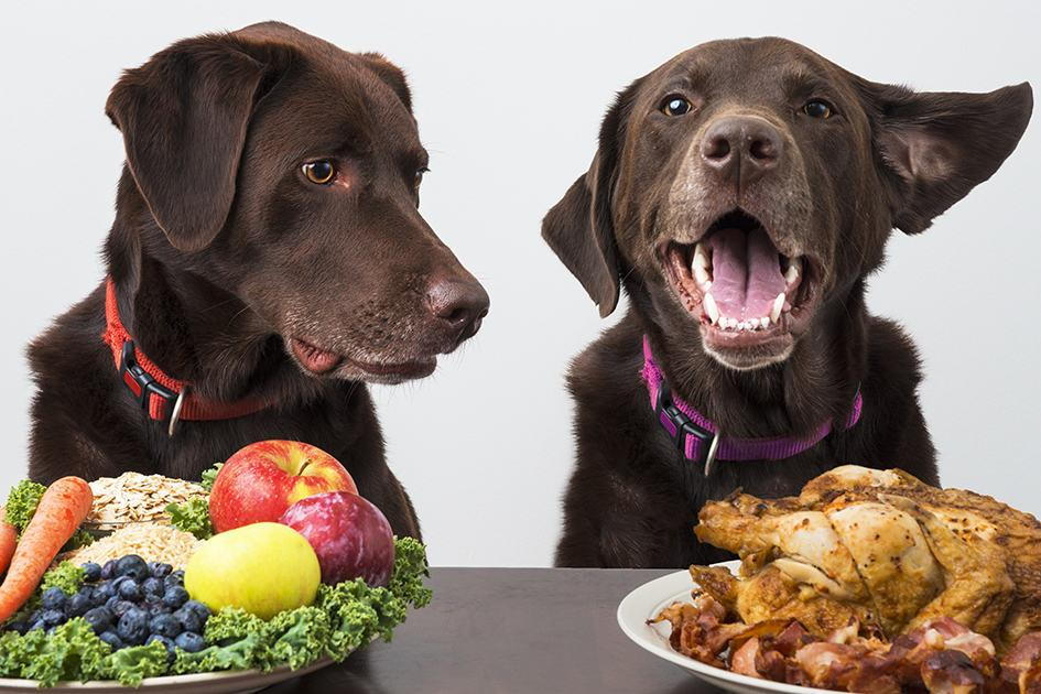 Complete and Balanced Nutritional Food for Dogs like Plant and Animal Diet in Lexington, Kentucky (KY)