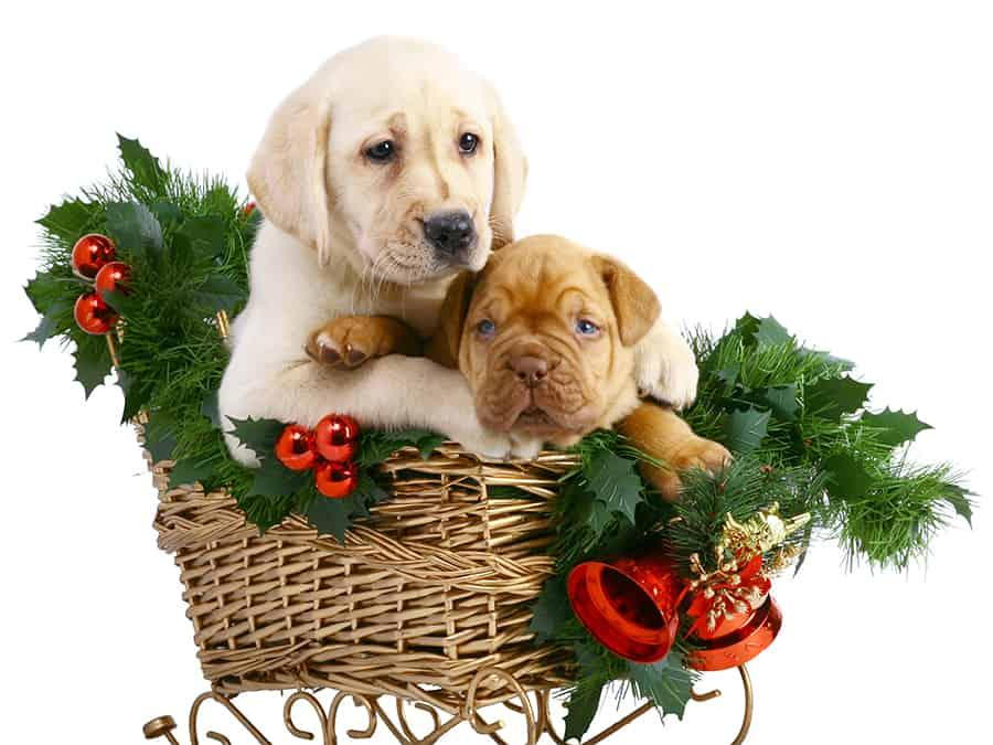 Christmas Decorations That Are Dangerous for Pets in Lexington, Kentucky (KY)