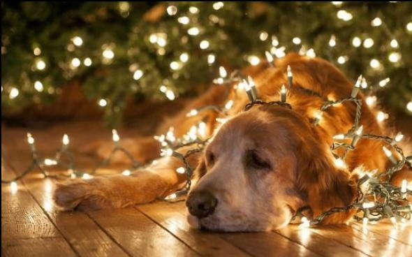 how to keep safe pet this holiday season, christmas items for pet to avoid, what to do if my pet eats this during christmas, owasso vet, veterinarian