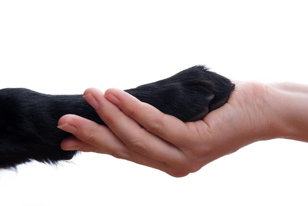 Pet owner saying goodbye to their pet