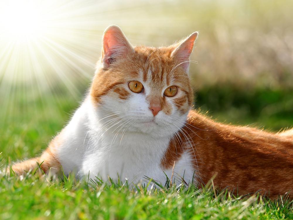 cat sitting in the sun