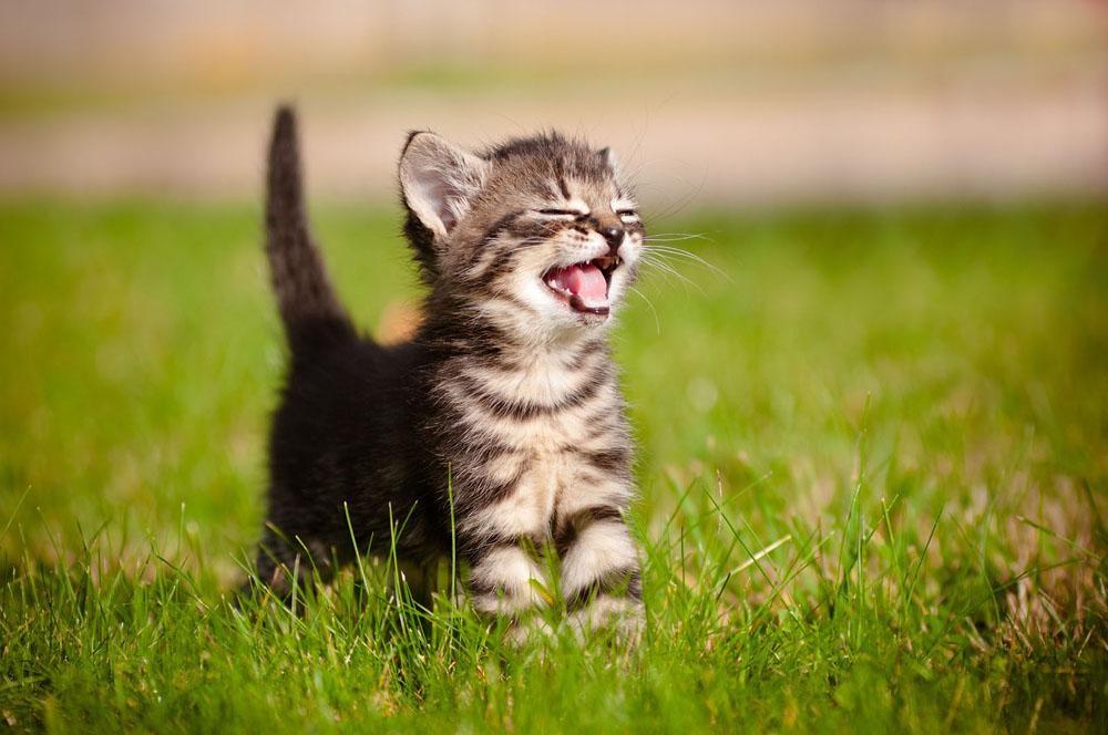 small kitten smiling