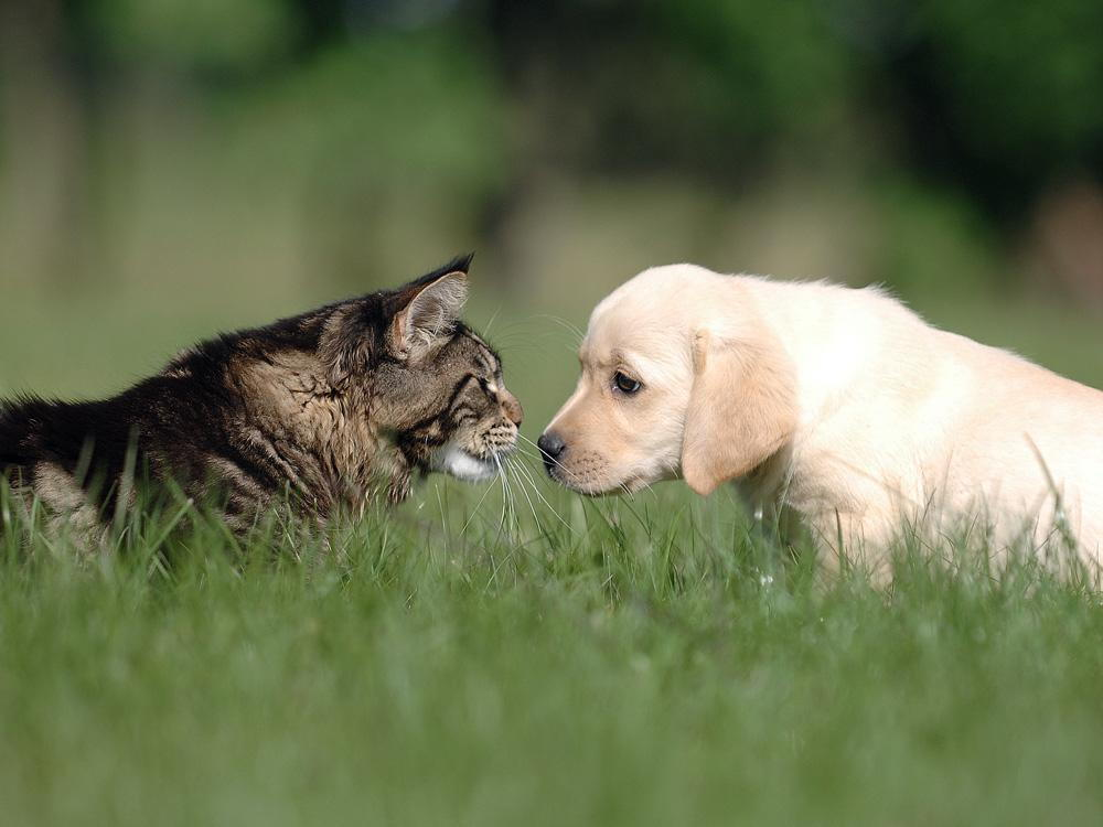 cat and dog outside playing