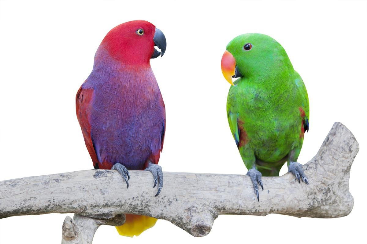 2 exotic birds sitting on a branch