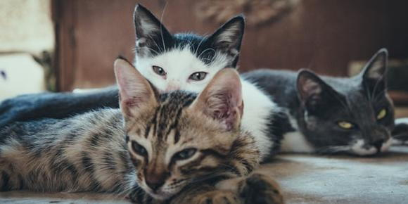 How To Celebrate National Cat Day Laveen Veterinary Center Veterinarian In Laveen Az