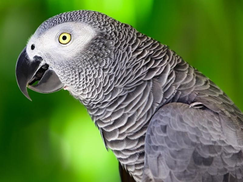 Close up of Exotic Parrot