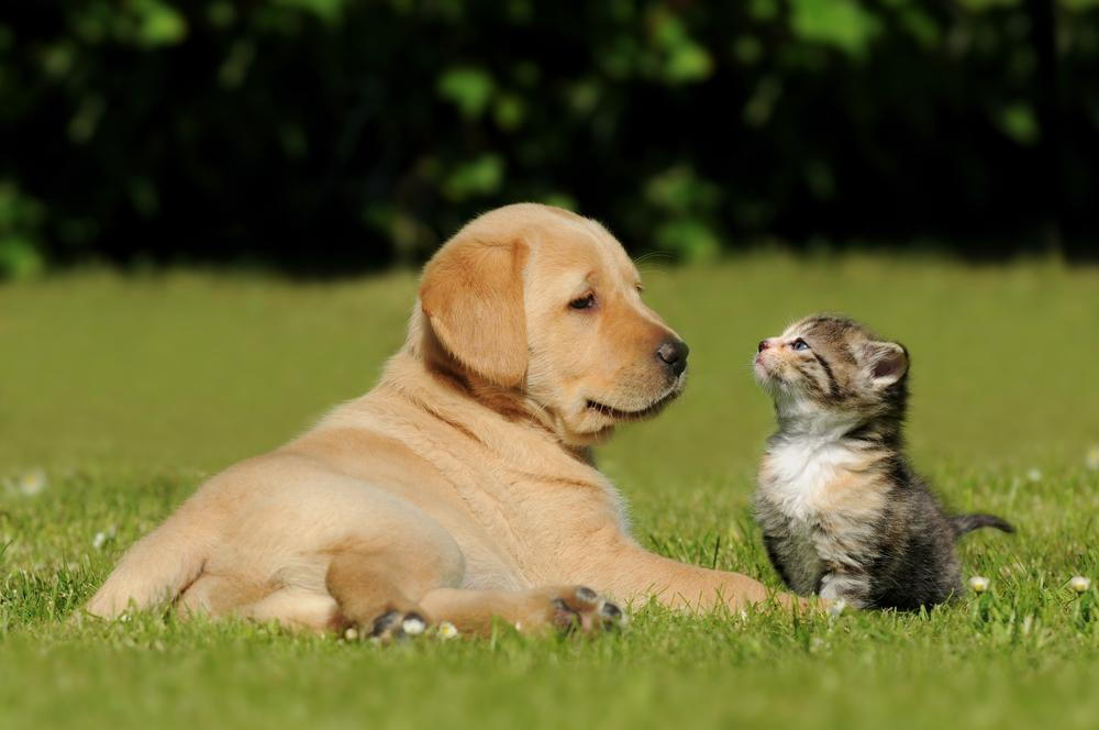 a cat and dog sitting on grass in Richmond and vancouver