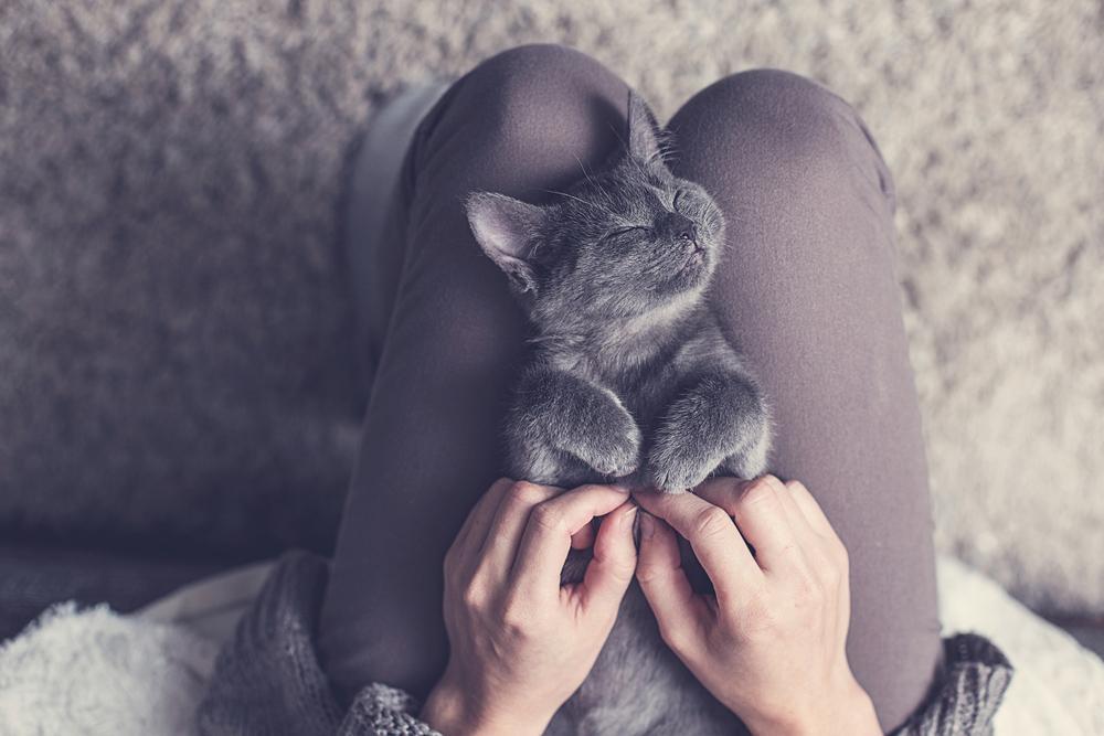 Kitten on owners lap