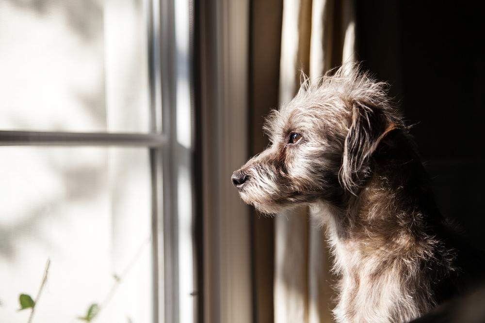Warning Signs Your Pet Needs to See a Veterinarian