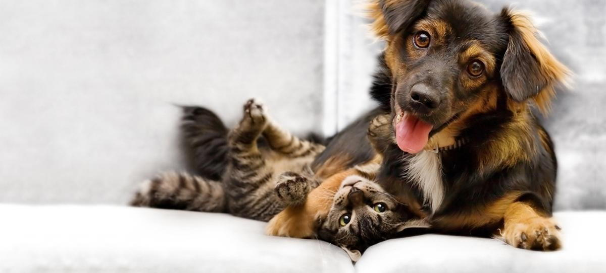 Dog and cat plying, healthy after their pet wellness exam.