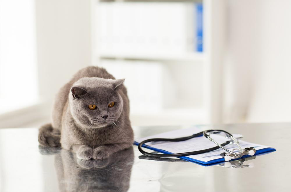 Everything You Need to Know About Common Pet Surgeries
