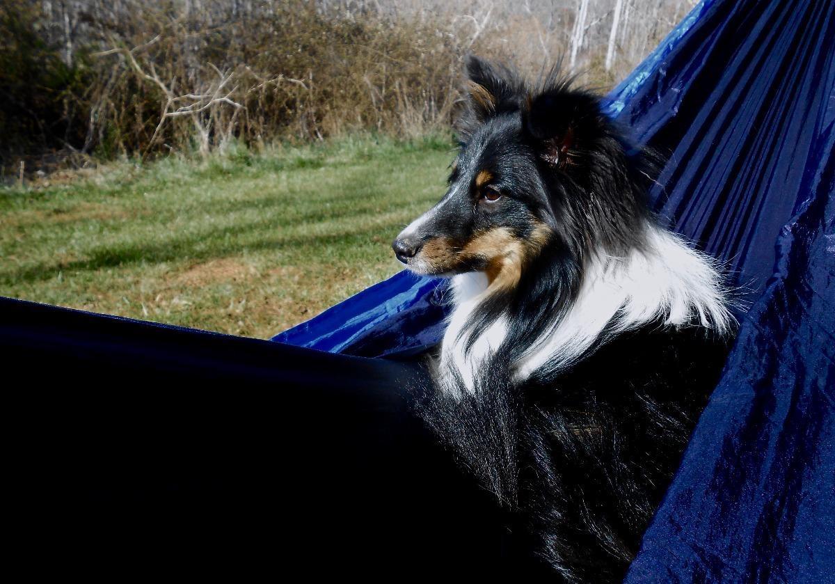 Dog resting on hammock outside