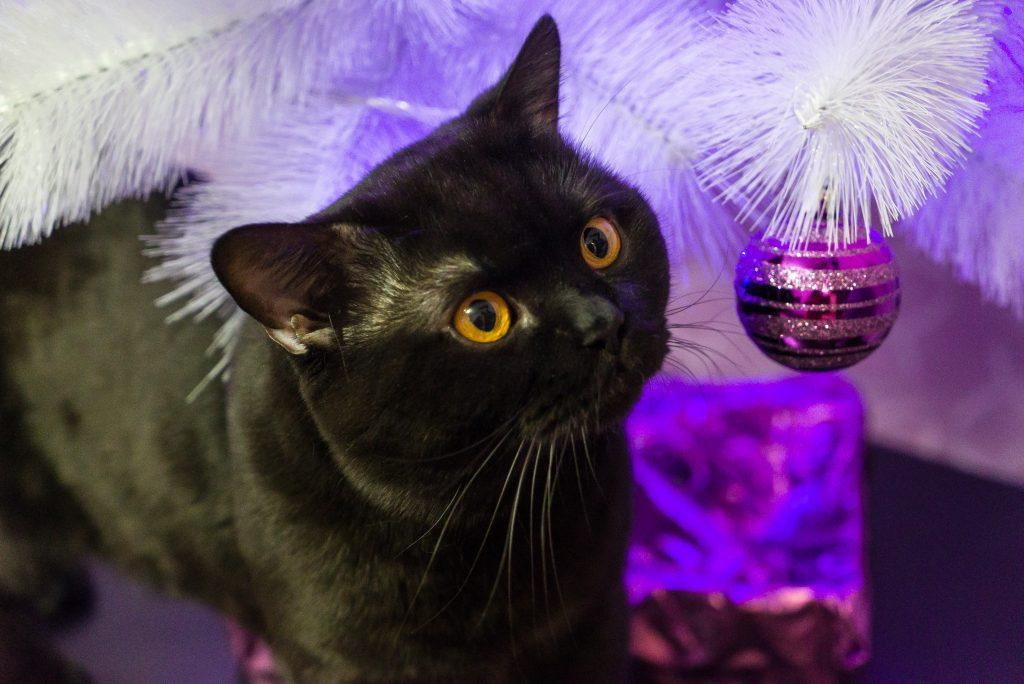 saving the christmas tree combating boredom in indoor cats - Black Cat Christmas Tree