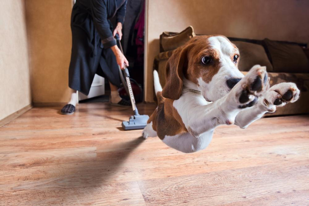 Dog running from vacuum cleaner