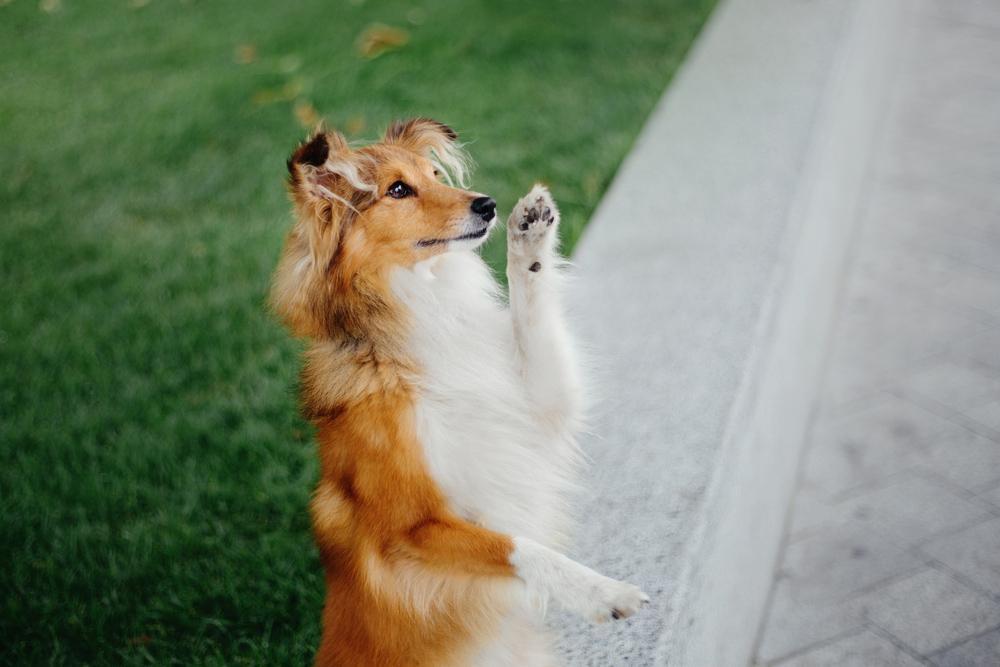 Dog Training in Memphis, TN