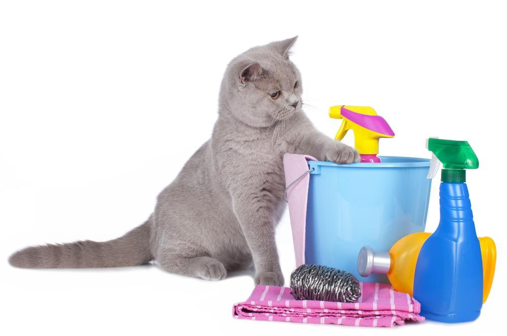 cat playing with a bucket of toxic cleaning supplies at risk of pet poisioning