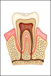 Root Canals Keep Your Smile Healthy