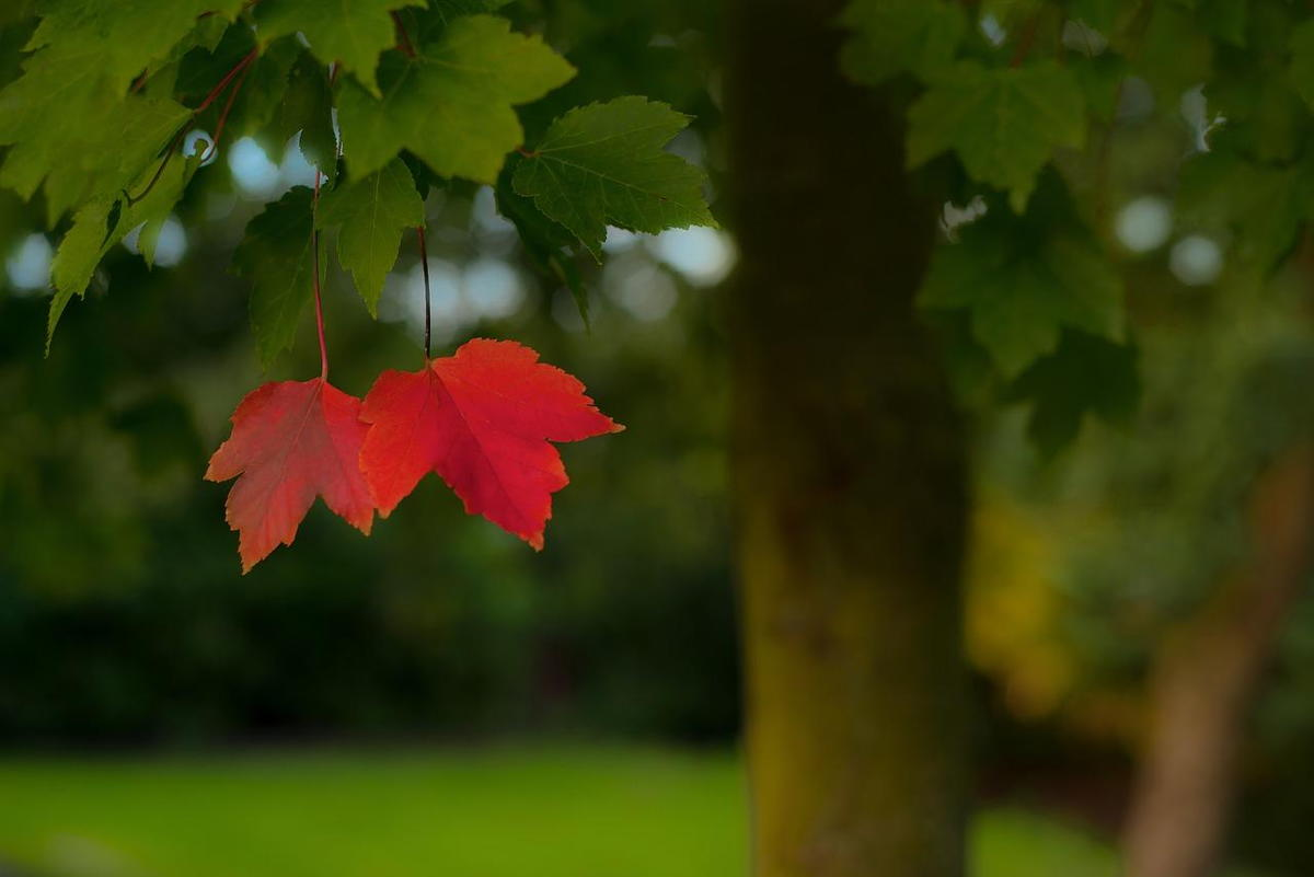leaves depression bay area