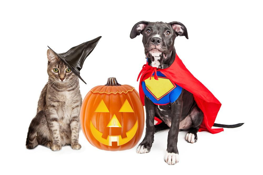 a dog and cat in Halloween costumes in Richmond