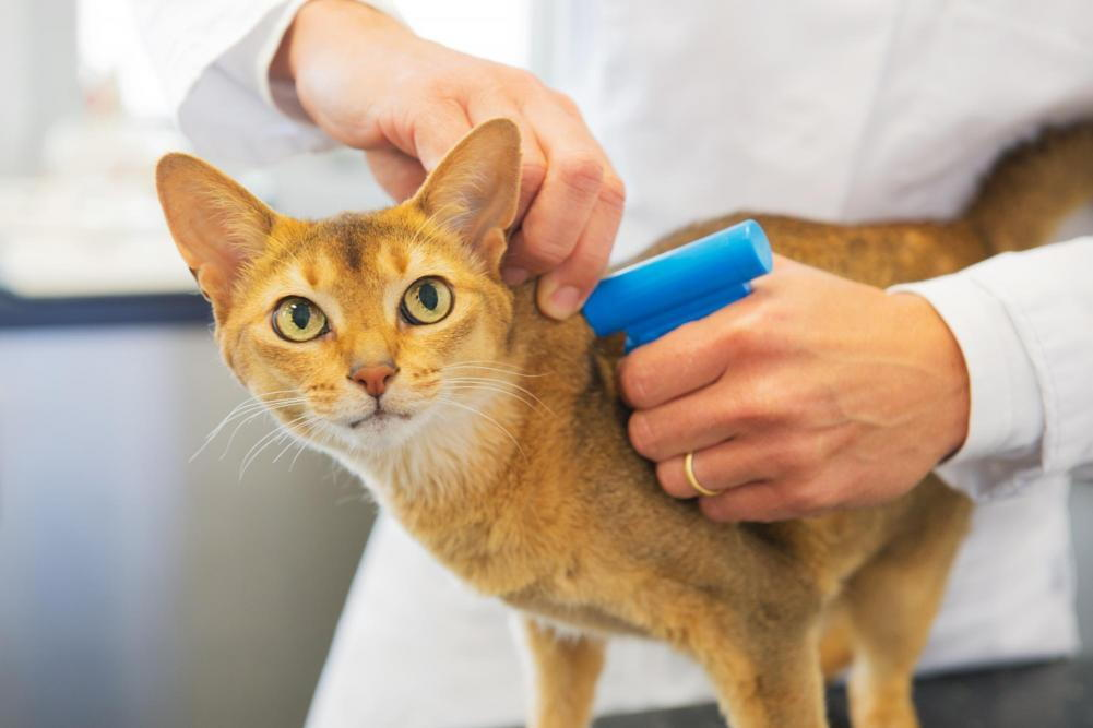 pet microchip services in our local vet clinic in richmond