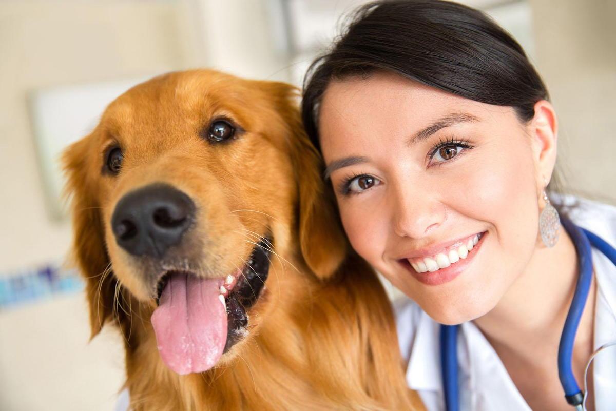 Charlotte veterinarian pet exam