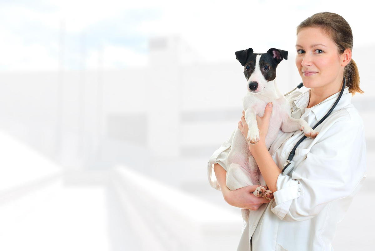 Simparica for fleas and ticks from your veterinarian in east Islip