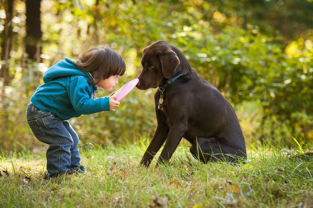 little boy and dog playing with a frisbee