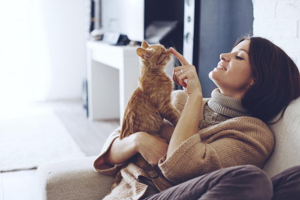 Cat owner playing with her cat