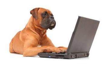 dog_working_on_laptop_1.jpg