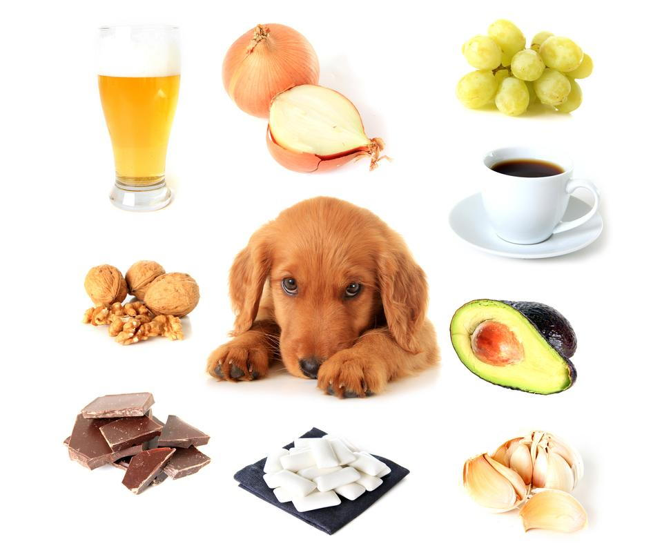 puppy surrounded by toxic foods like grapes, onions, and chocolate