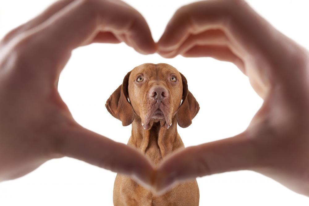 Senior Pet Care in Scarsdale