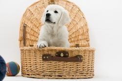 dog inside of a basket