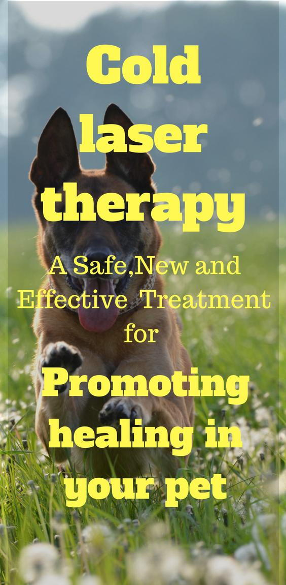 German Shepherd dog runs through a field. Does he need cold laser therapy? Learn why its safe for dogs and cats.