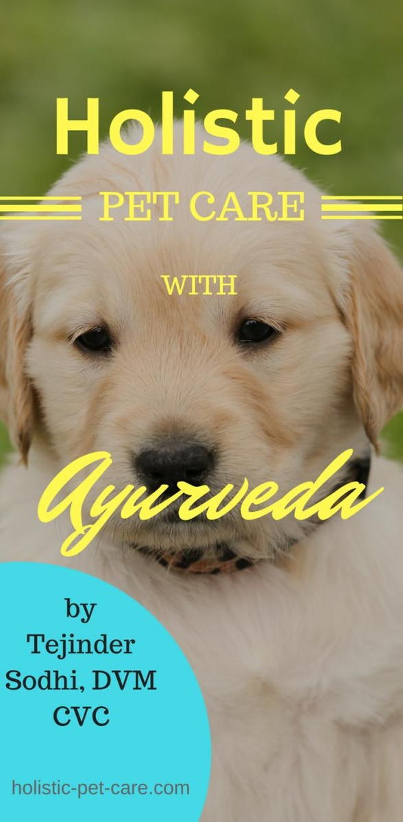 Holistic Pet Care with Ayurveda
