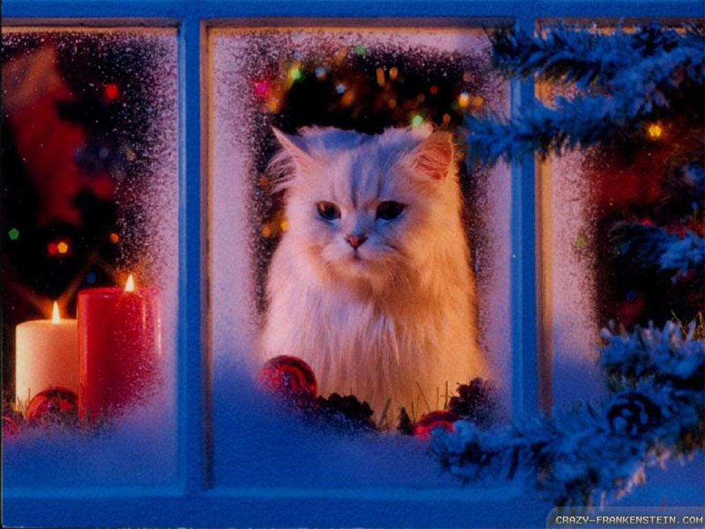 White Persian Looks Out a Frosted Window in front of a Holiday Scene
