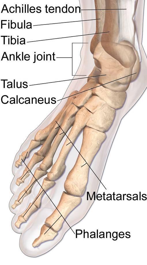 foot injuries, bunions, plantar fasciitis, athlete injuries, crossfit injuries