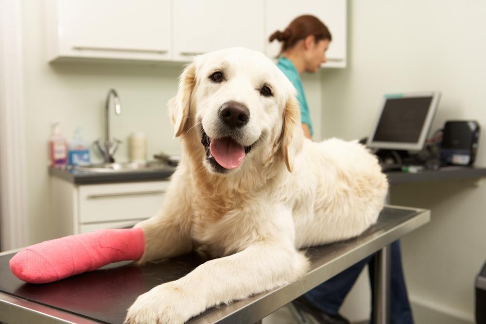dog-getting-hot-spot-treatment-reiserstown