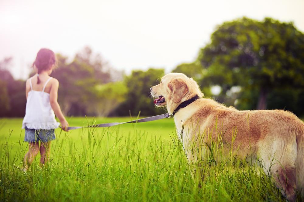 a young girl holding her dog with a leash in a field of grass
