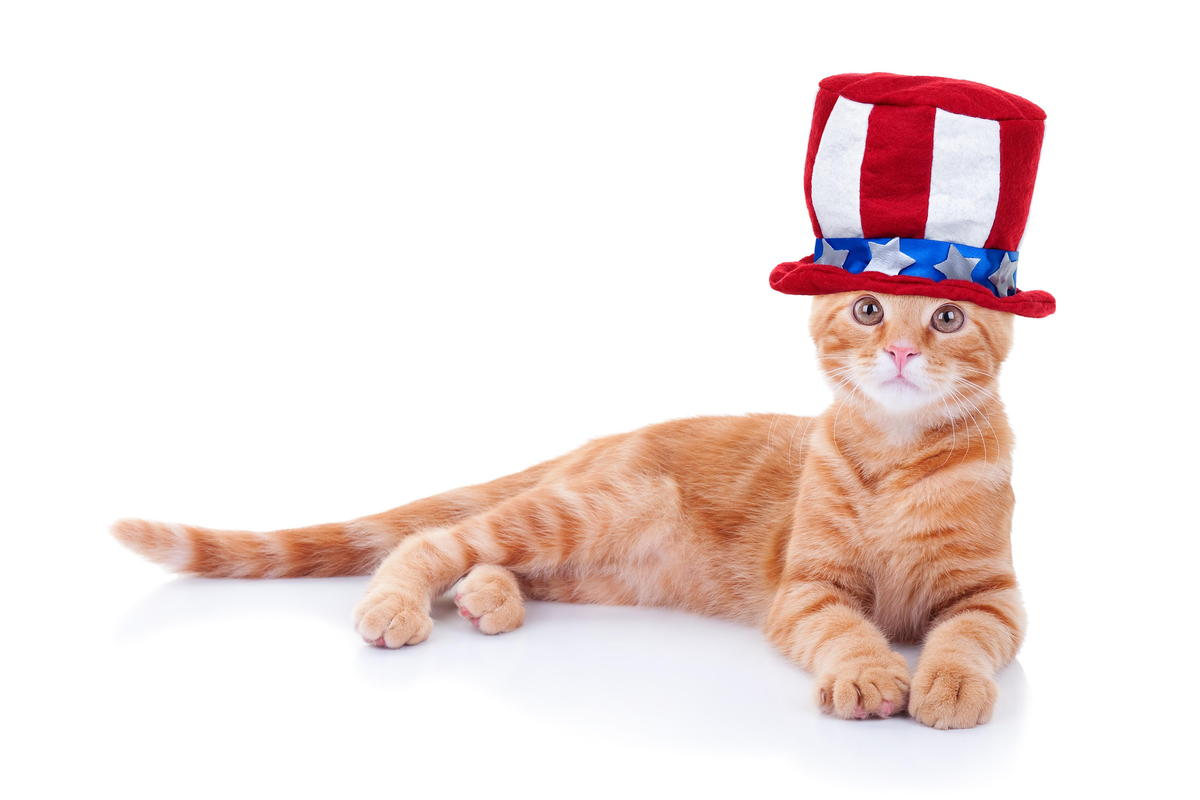 tips for keeping pets safe during the 4th of july from your casper veterinarian