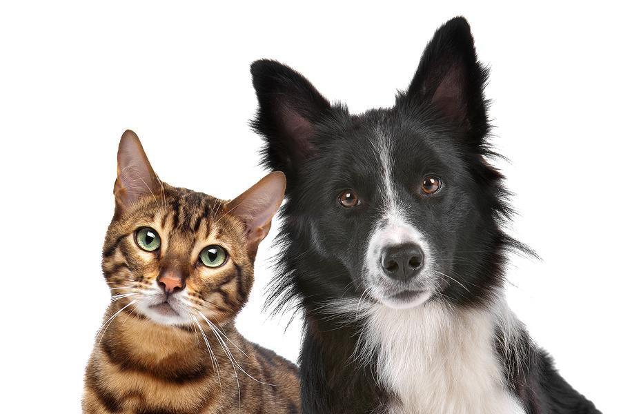 westside animal hospital is your source for casper pet boarding