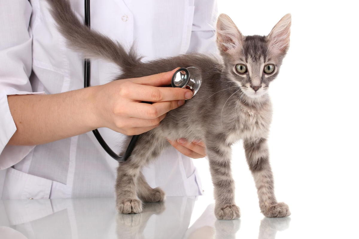 feline wellness exam