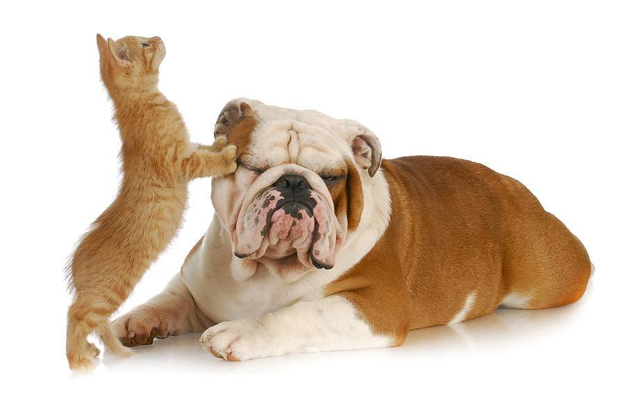 Dog and cat pet boarding in Casper, WY
