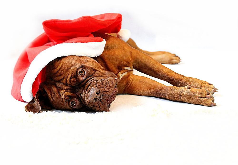 foods to avoid feeding your pet during the holiday season