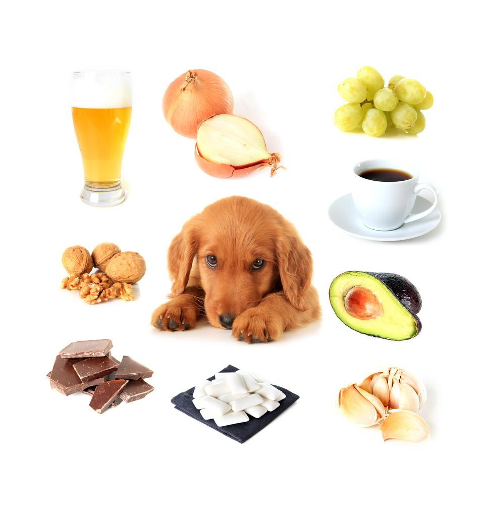 Dog surrounded by poisonous items and food